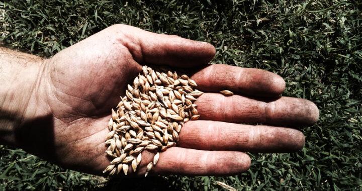 Cereali e agricoltori Libera Nos In Campo